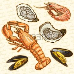 seafood  Set lobster, oysters, mussels and shrimp Stock Vector - 18124407