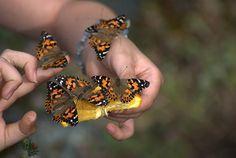 Mariposa Butterfly Festival by highsierracowboy, via Flickr
