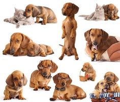 Can you ever own too many Dachshunds? No matter how many you own, here's Dachshund names for boys and girls chosen for just this breed... http://www.dog-names-and-more.com/Dachshund-Names.html