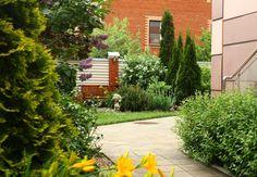 Можжевельники и туи — основные растения для хвойных композиций без камней | Сад по-новому