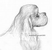 Image result for Cocker Spaniel Drawings Easy