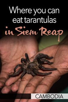 In Cambodia's capital, Siem Reap, you'll find a few restaurants that offer one of the strangest dishes you'll have - tarantulas! If you're interested in eating tarantulas in Siem Reap, I would recommend this place because you'll also be supporting the local community.