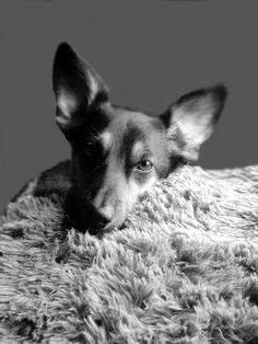 Lilas Welt: ☆ | Some last Words  #Silvester #Jahreswechsel #Hunde #Hundeblog