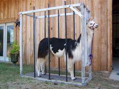Texas Collection-The Llamas of Gin Creek Ranch Mothers Day Presents, Hobby Farms, Alpacas, Pet Stuff, Livestock, Ranch, Fiber, Drama
