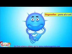 Animal Cell Structure (animation) - Different Parts & their  Functions