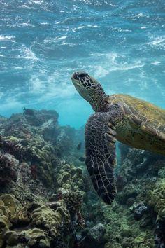 Sea Turtle by CV