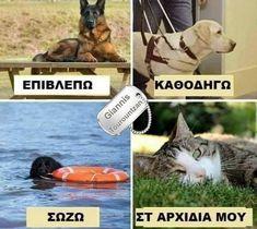 Meme Chat, Greek Memes, Photo Chat, Funny Vines, Funny Cartoons, Funny Posts, Pugs, Jokes, Dog Humor