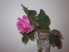 Rose fra egen hage
