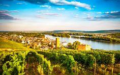 Lataa kuva Rudesheim, panorama, kesällä, viinitarhat, Saksa