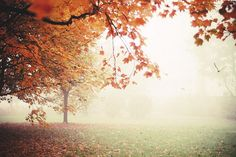 a bird in the fog by  yoostynaa #autumn