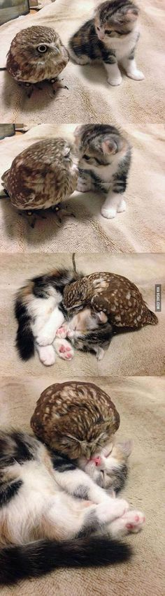 The owl and the pussycat.....