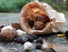 Dags att plantera lökar och knölar / Foto: Anna Theorin
