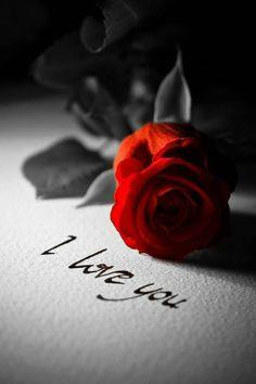 Avui les roses son més que llum i color, són passió, esperança i amor. Feliç Sant Jordi 🌹❤⠀⠀⠀⠀⠀⠀⠀⠀⠀⠀⠀⠀⠀⠀⠀⠀⠀⠀⠀⠀⠀⠀⠀⠀⠀⠀⠀⠀Hoy las rosas son mas que luz y color, son pasión, esperanza y amor. Eckhart Tolle Meditation, You Are My Moon, Romantic Table Setting, Romance And Love, True Romance, Valentine's Day, Love Wallpaper, Heart Wallpaper, Mobile Wallpaper
