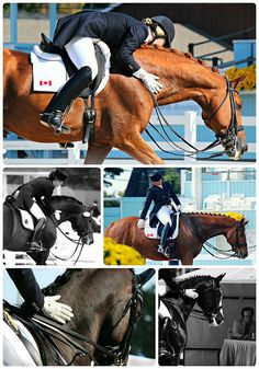 Appreciation | Dressage at Devon I J. MacNeill