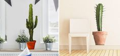 Dove vai se un cactus in casa non ce l'hai. Cactus, Planter Pots, Adhesive