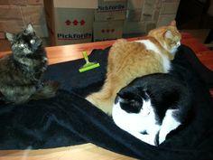 Table blanket sharing