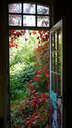 Door in abandoned home Might have gone into the garden years ago.