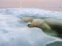 This is what a polar bear looks like while under the ice.