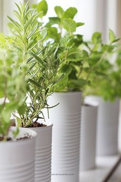 Window Sill Herb Garden — Kendra Castillo No backyard? No problem! The sill is your new container garden, and people are using recycled materials like cans to house their new plants. Herb Garden In Kitchen, Kitchen Herbs, Window Seal Herb Garden, Herbs Garden, Kitchen Small, Organic Gardening, Gardening Tips, Gardening Zones, Gardening Supplies