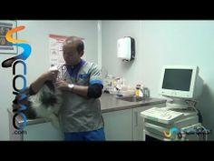 Limpiar los dientes del perro - YouTube