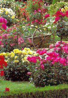 Wagon in the Rose Garden