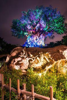 Disney039s magic kingdom - 4 5