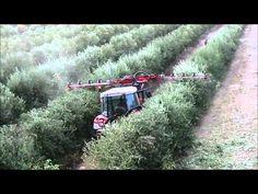 Fruit Trees, Monster Trucks, Olive Tree