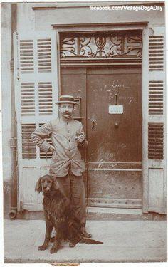 Irish Setter, 1906, France Facebook.com/sodoggonefunny