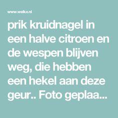 prik kruidnagel in een halve citroen en de wespen blijven weg, die hebben een hekel aan deze geur.. Foto geplaatst door emys op Welke.nl