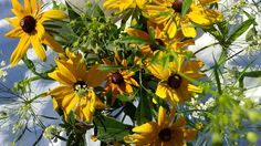 Sunshine rudbeckia design with starburst ammi majus on a bright November morning. Glorious. 🌞🌻
