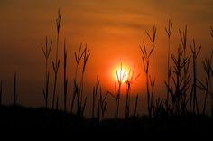 Prairie Grass Sunrise 2 by Duane Klipping on 500px