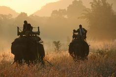 Mahouts on their early morning rounds at Kaziranga National Park,India