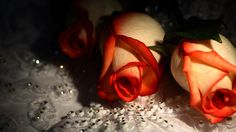 Diamonds and Roses HD 1080p Wallpapers Download
