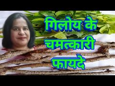 Medicinal benefits of Giloy/Amrita plant in Hindi. - YouTube