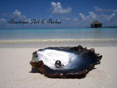 Boutique Art E Perlas Boutique, Mother Earth, Sea Shells, Waves, Pearls, World, Outdoor, Google Search, Tahitian Pearls