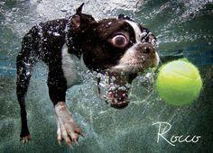 imagens embaixo d'agua cachorro - Pesquisa Google