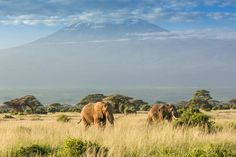 Savanna Biome, Savanna Animals, Small Shrubs, Biomes, Africa, Facts, Science, Mountains, Travel