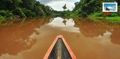 El Parque Nacional Yasuní en Ecuador se extiende por un territorio poco menor de 10.000 km2 inmersos de selva. Fue declarado como Reserva de la Biósfera por la Unesco por el año 1989 y es parte del territorio donde habita el pueblo huaorani, tagaeri y taromenane.
