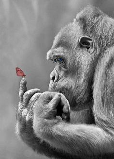 """animalwildcard: """"monkey with butterfly """""""