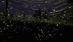 Star Trails and Fireflies