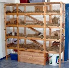 diy wooden multi level bunny cages | Re: Multi level indoor cage?: