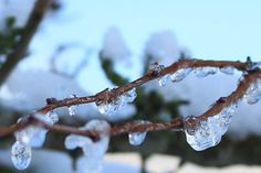 is på grene