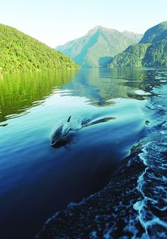 Right on our doorstep... Doubtful Sound.. New Zealand...a magical place