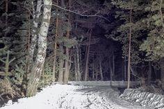 зима,лес,ночь,дорога