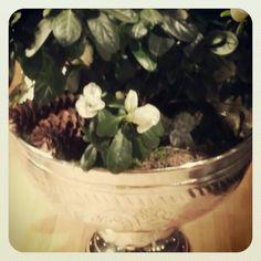 Asalea Plants, Plant, Planets