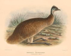 15 Extinct Bird Species & Possible Reasons for their Extinction
