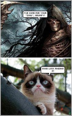 Hilarious And Sarcastic Grumpy Cat Memes Grumpy Cat Quotes, Funny Grumpy Cat Memes, Funny Animal Jokes, Cute Funny Animals, Funny Animal Pictures, Cute Cats, Funny Cats, Funniest Cat Memes, Cute Cat Memes