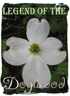 The Legend of the Dogwood tree- a fun and religious tradition for kids during this Easter season! We will be planting a dogwood tree this Easter! Dogwood Trees, Dogwood Flowers, Special Recipes, Crucifixion Of Jesus, Easter Season, Palm Sunday, Easter Traditions, Easter Weekend, Hoppy Easter