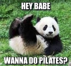 A panda bear is one of the cutest and funniest animals. I tried to gather some funny panda videos and cute panda videos in this cute pandas doing funny thing. Pandas Baby, Baby Panda Bears, Cute Baby Animals, Funny Animals, Wild Animals, Funniest Animals, Giant Pandas, Panda Meme, Niedlicher Panda