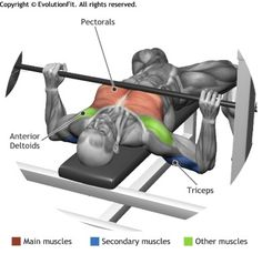 CHEST - BARBELL BENCH PRESS